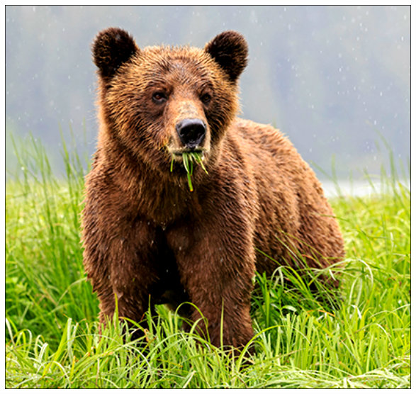 grizzly-bear-sanctuary-canada_79164_600x450