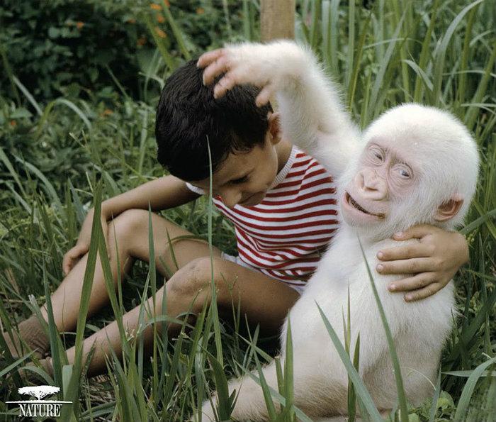 albino-animals-12