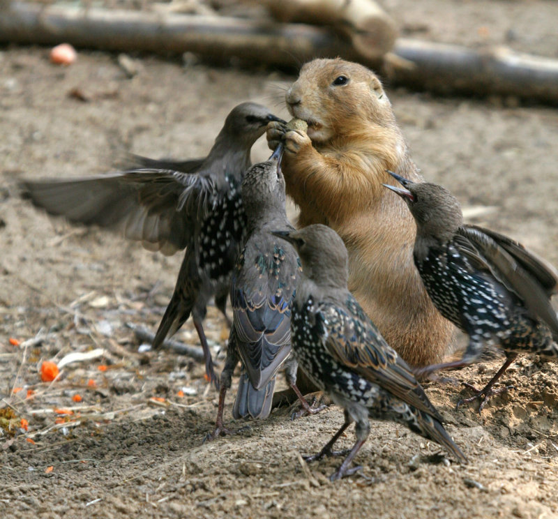 23-birds-food-fight-photography-by-tad