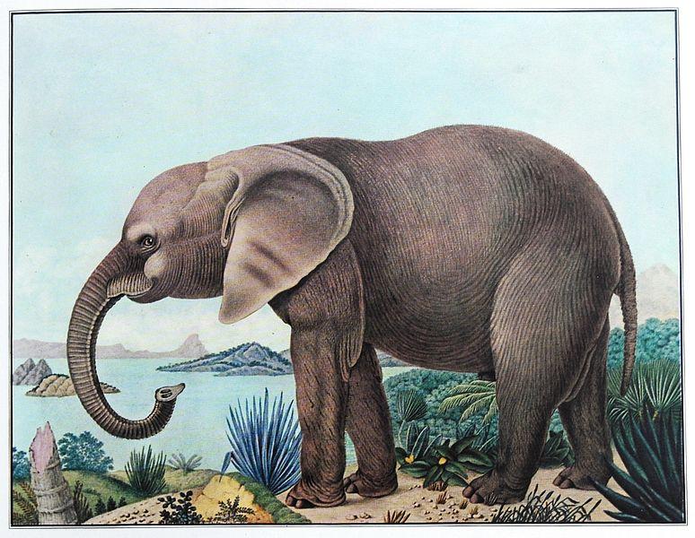 774px-Der_afrikanische_Elefant