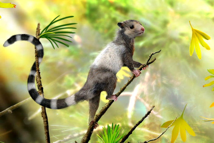 0910-squirrel-Jurassic-mammal_full_600
