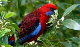 Birds can smell their ownSpecies.