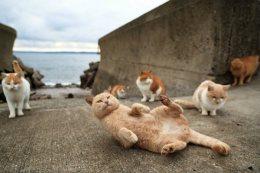 Tashirojima, 'Cat Island'.
