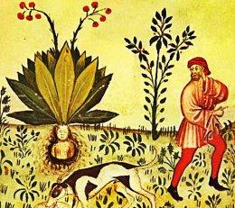 Mandrake, Magical &Mysterious.
