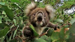 Secrets of the EucalyptusTree.