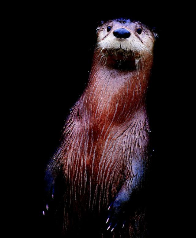 31_nocturne_river_otter1_p113_p113