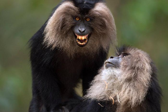 dec14_e06_macaques