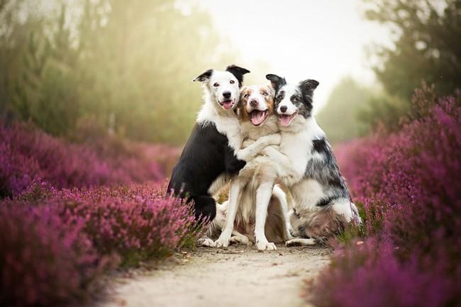 Dogs_by_Alicja_Zmyslowka_01-650x434