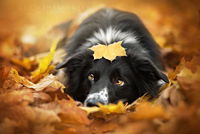 Dogs_by_Alicja_Zmyslowka_02-650x434
