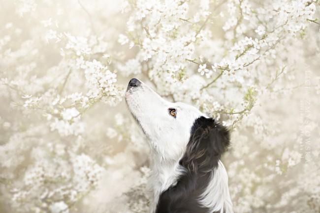 Dogs_by_Alicja_Zmyslowka_05-650x434