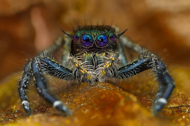 head-on-spider-9
