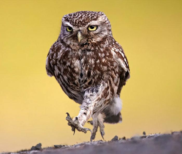 owl-photography-10__880