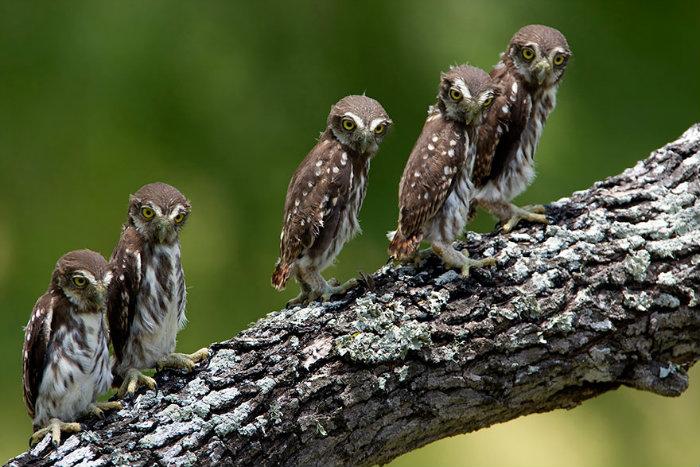 owl-photography-30__880