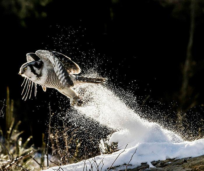 owl-photography-4__880