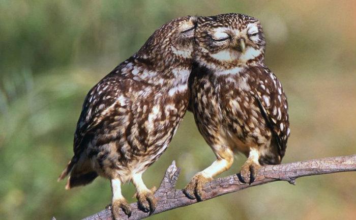 owl-photography-cute-100__880