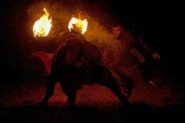 The Fire BullFestival.