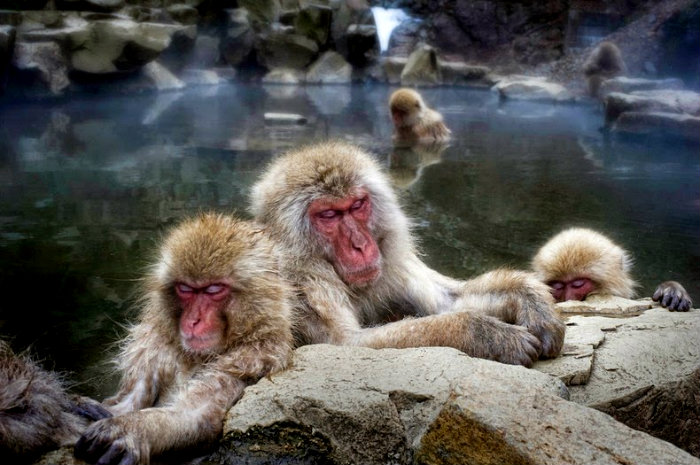 snow-monkeys-jigokudani-9[2]