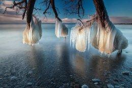 Frozen Trees of LakeOntario.