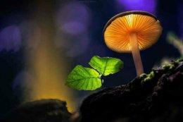 Magical Mushrooms, by MartinPfister.