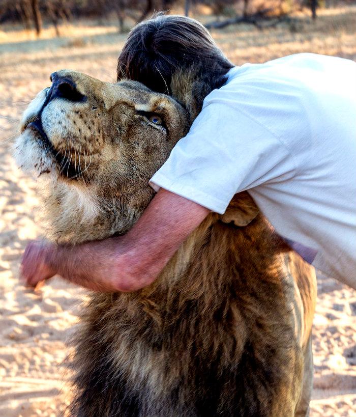 tame-pet-lion-zion-frikkie-von-solms-8