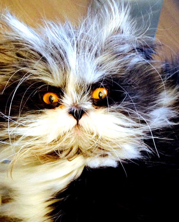 hairy-cat-death-stare-atchoum-15