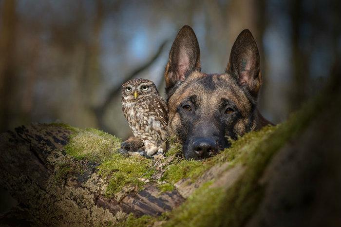 ingo-else-dog-owl-friendship-tanja-brandt-4