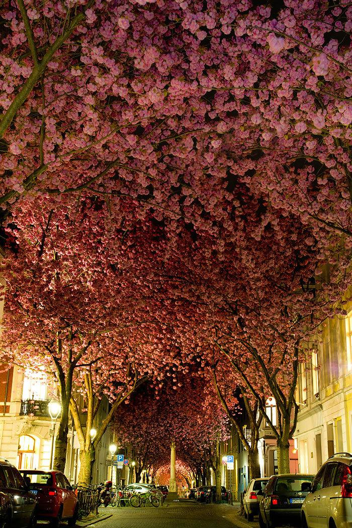 beautiful-streets-trellis-canopies-2__700