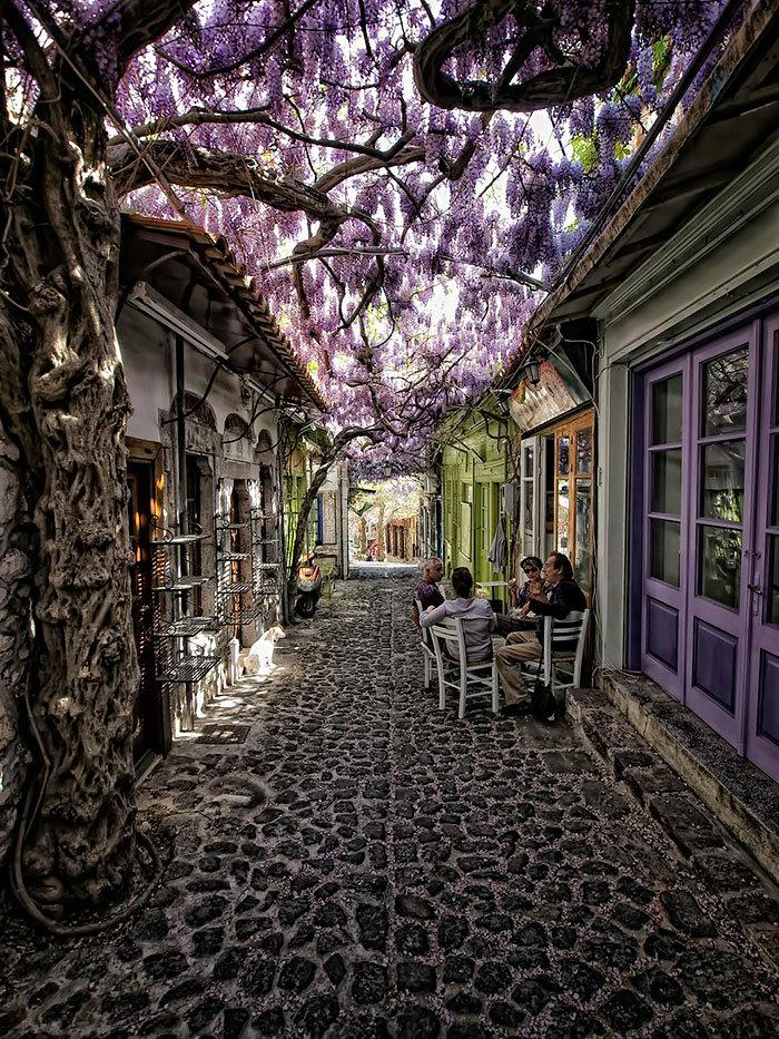 beautiful-streets-trellis-canopies-4__700