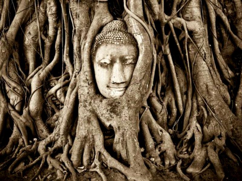 buddha-statue-tree-thailand_82048_990x742