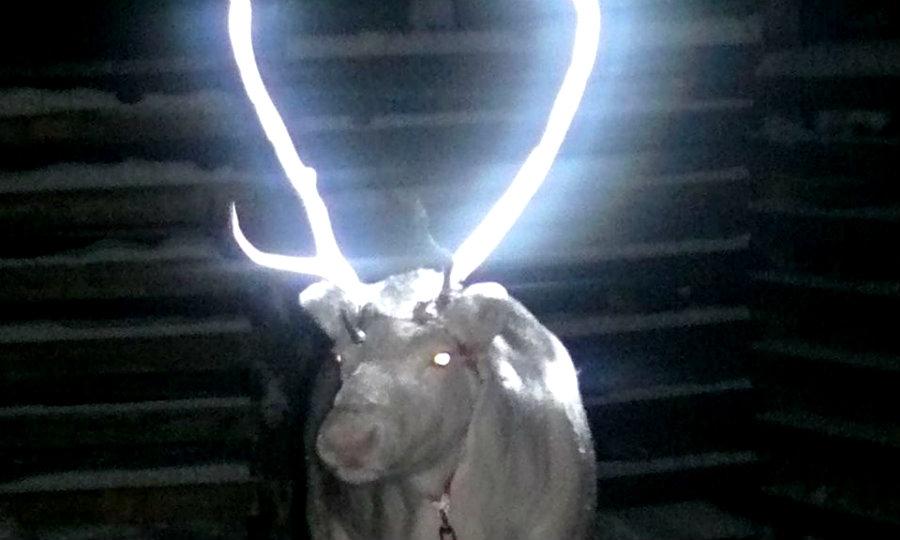 glowing-reindeer-014