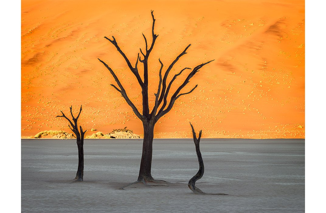 3-trees-namibia-11249_2_267217.jpg__1072x0_q85_subject_location-484,347_upscale