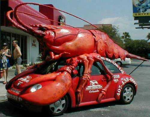 crayfish_found-scaled1000
