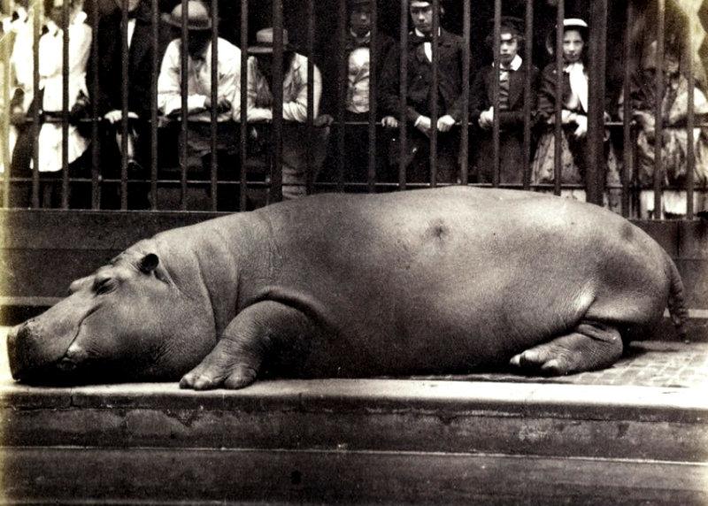 zoo-18551