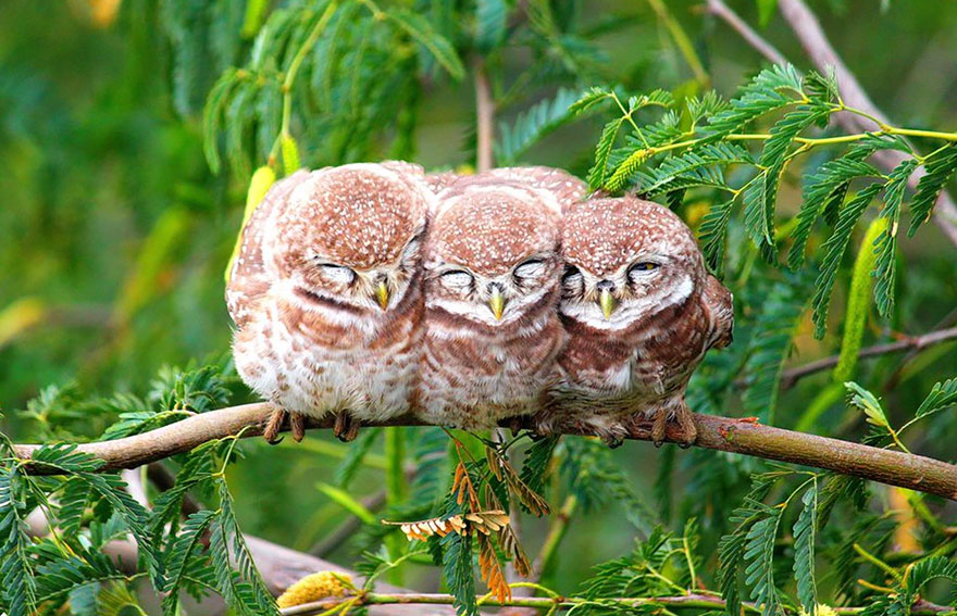 birds-keep-warm-bird-huddles-10__880