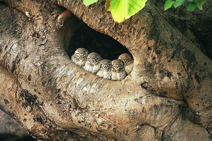 birds-keep-warm-bird-huddles-7__880