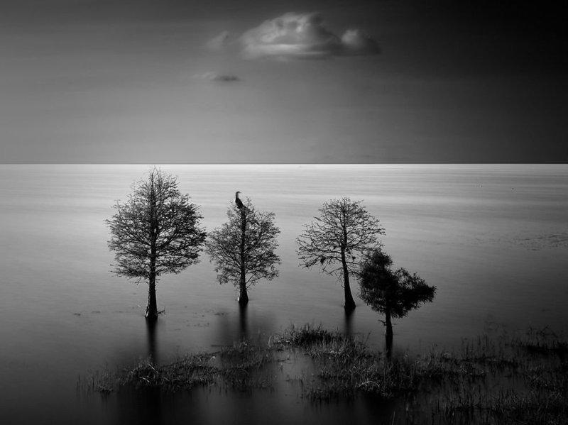 lake-hollingsworth-landscape_92076_990x742