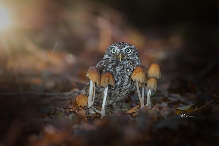 owl-and-mushrooms-tanja-brandt-2__880