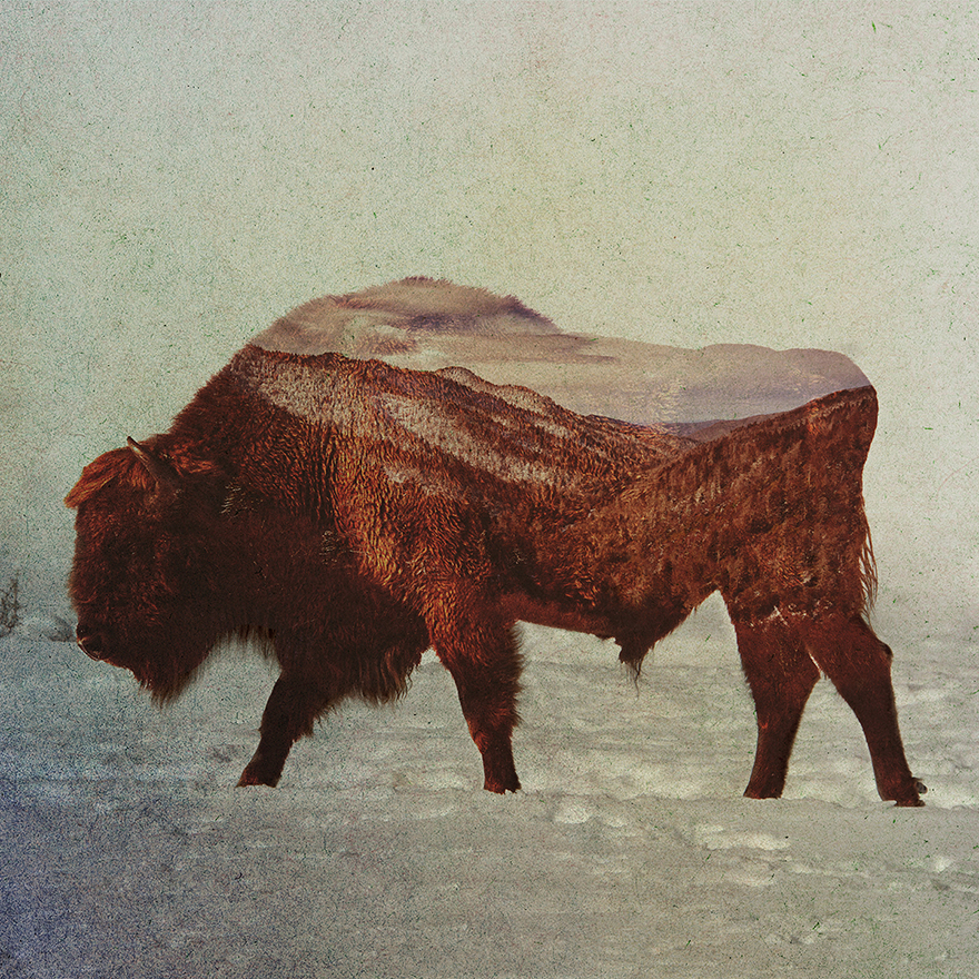 double-exposure-portraits-of-wild-animals-that-reflect-their-habitat-4__880