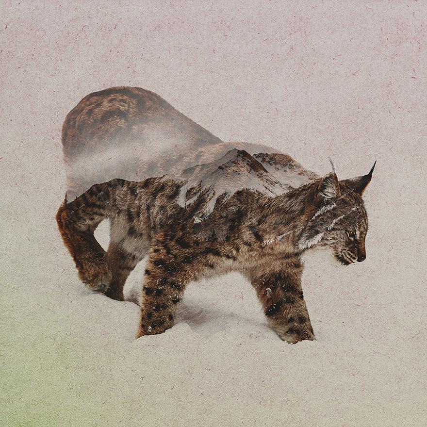 Double-Exposure-Portraits-Of-Wild-Animals-That-Reflect-Their-Habitat2__880