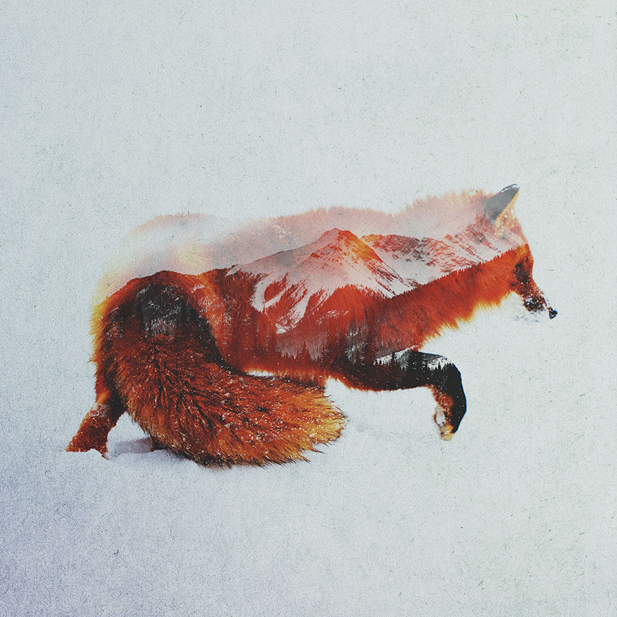 double-exposure-portraits-of-wild-animals-that-reflect-their-habitat__880