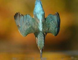 'Kingfisher' by AlanMcFadyen.