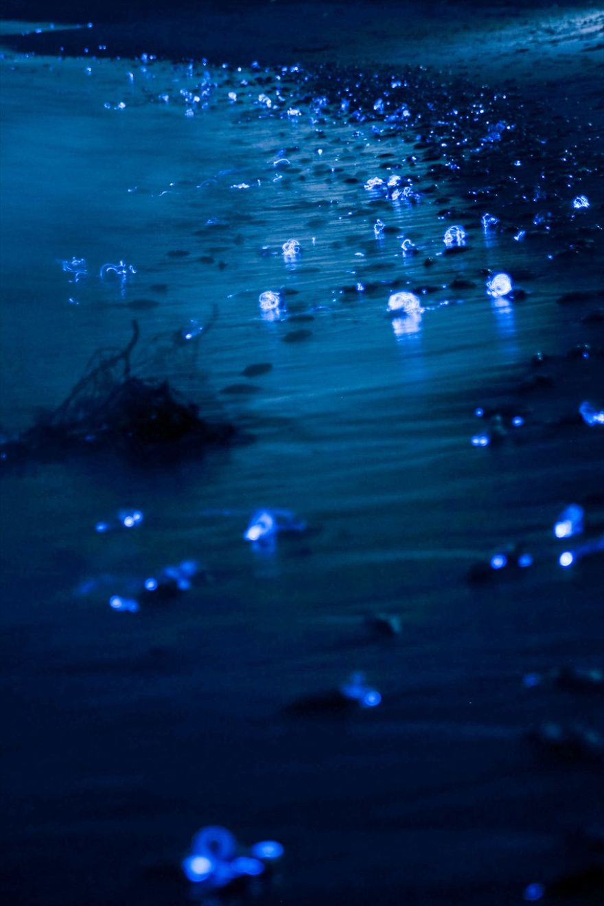 i-captured-the-mysterious-glowing-sea-in-japan-2__880