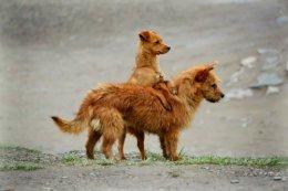 Best of Friends,Xiahe.