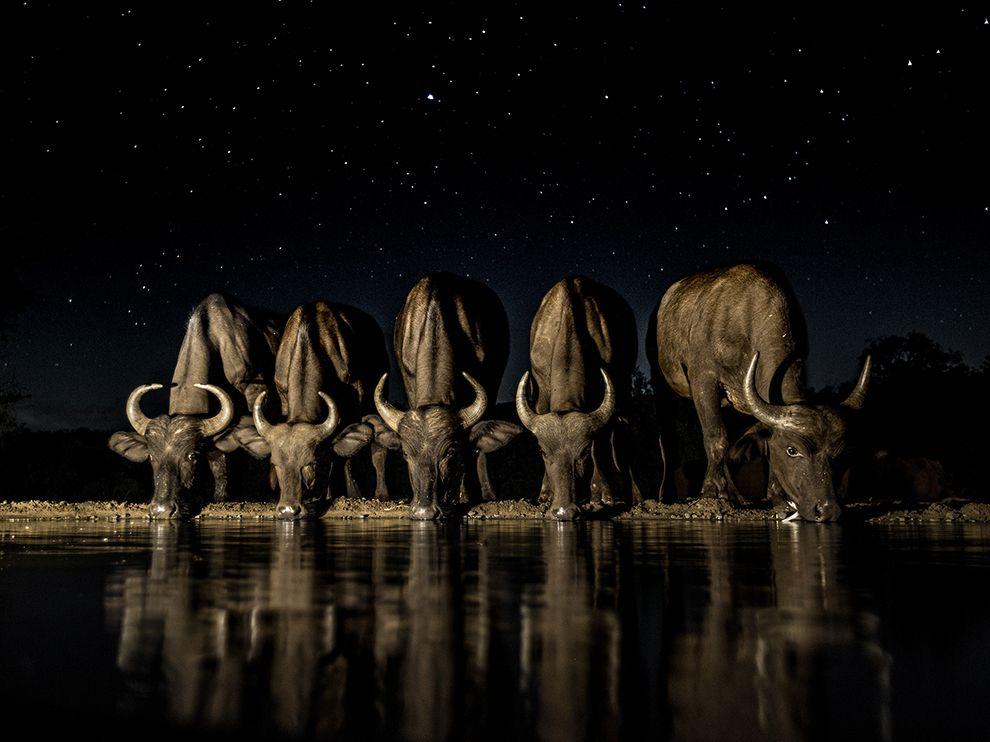 buffalo-night-drink_95084_990x742