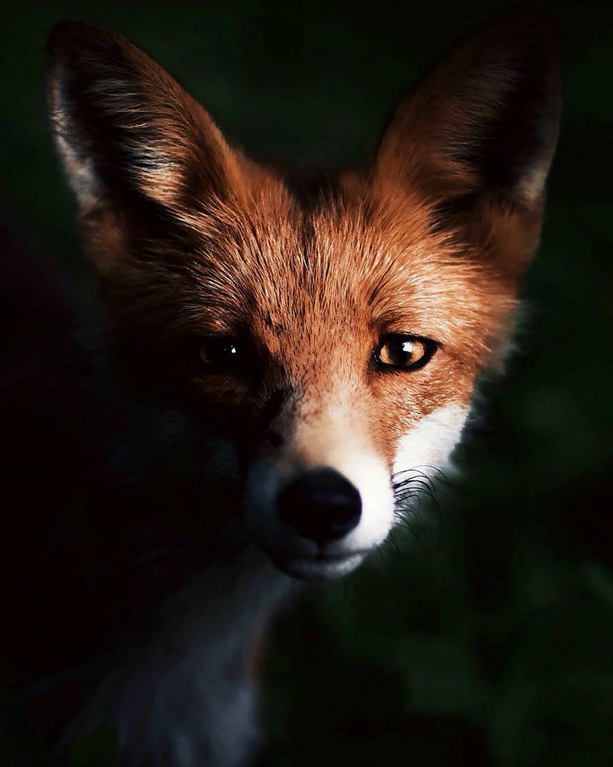 wild-animal-photography-konsta-punkka-10