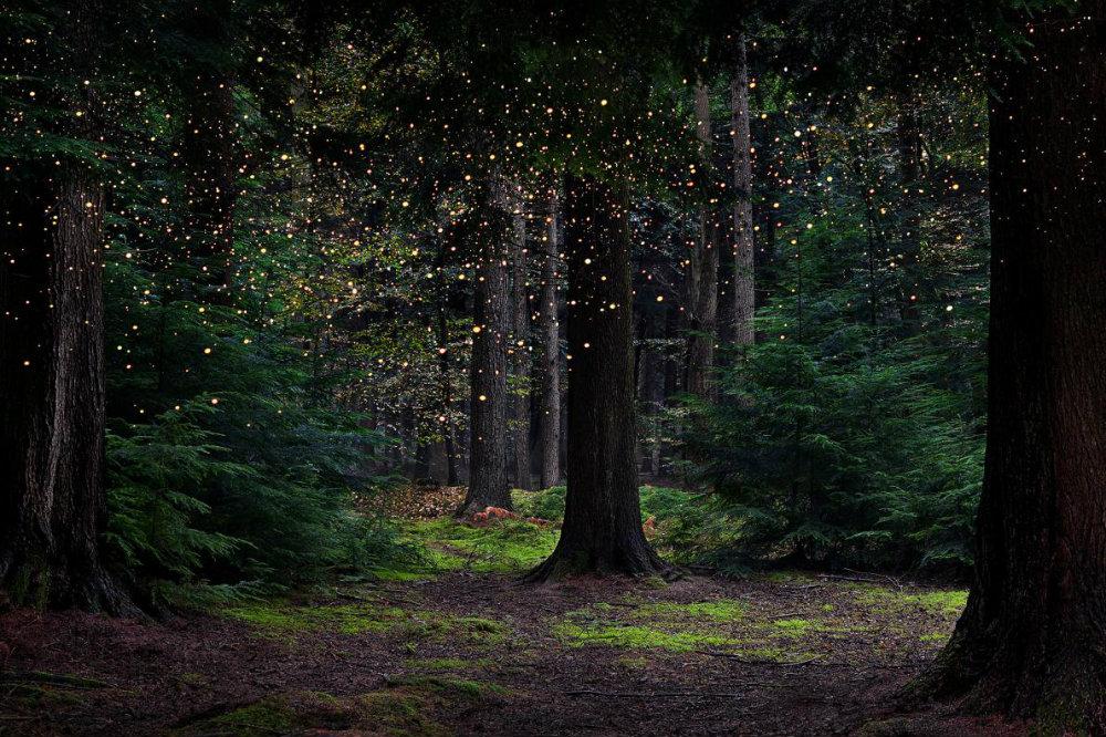 ellie-davies-forest-08