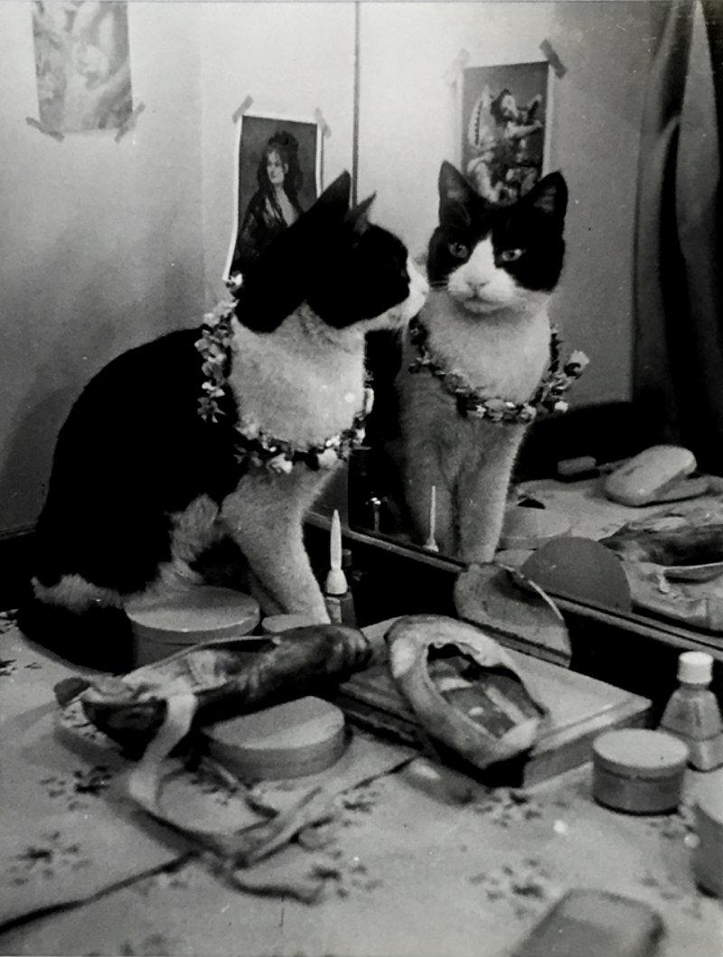thurston-hopkins-cats-of-london-5