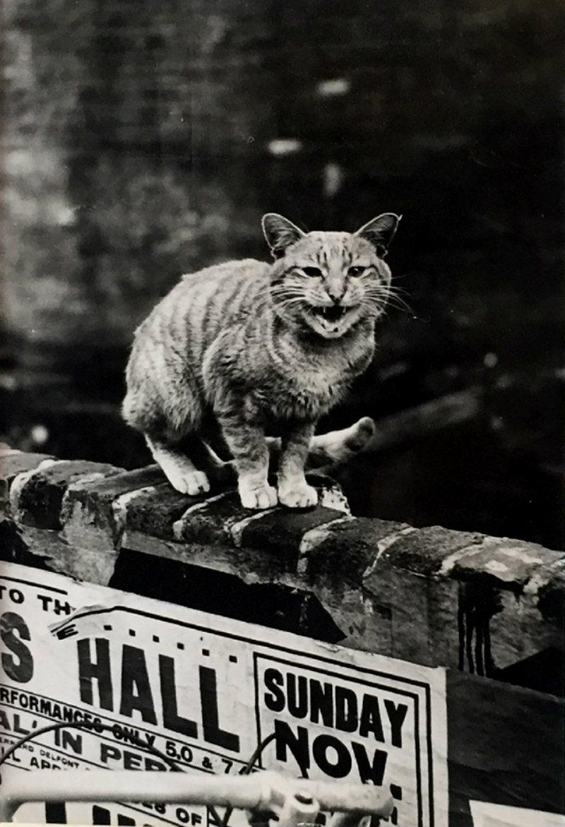 thurston-hopkins-cats-of-london-6