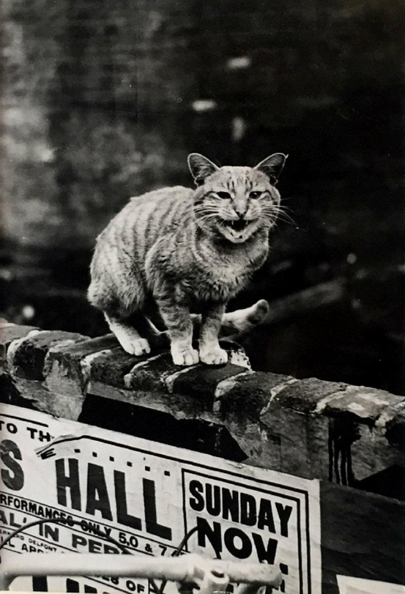 thurston-hopkins-cats-of-london-6