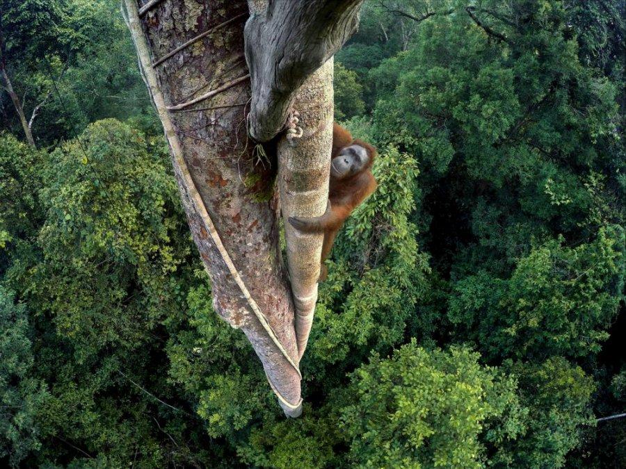 tim-laman-wildlife-photographer-of-the-year-grand